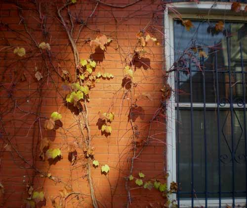 November-vine