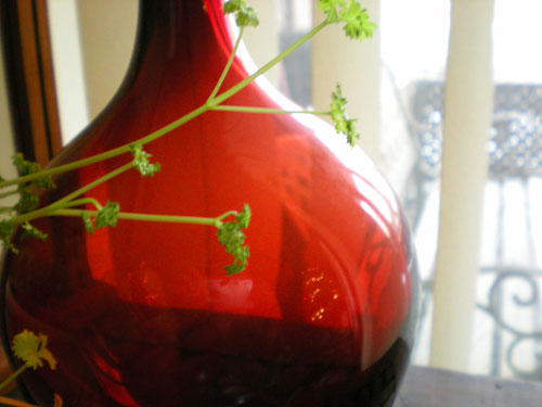 Red-vase-and-parsley
