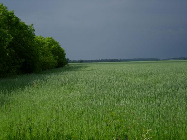Quebecfields_2