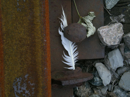 Tracks_feath