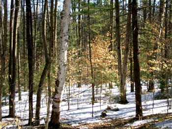 Late-winter-woods-017