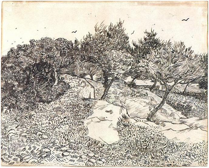 Olive-Trees -Montmajour