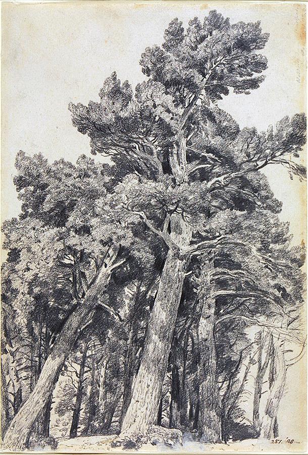 Trees_constab