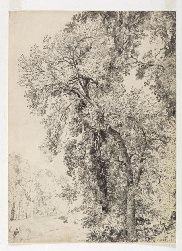 Trees_lorrain